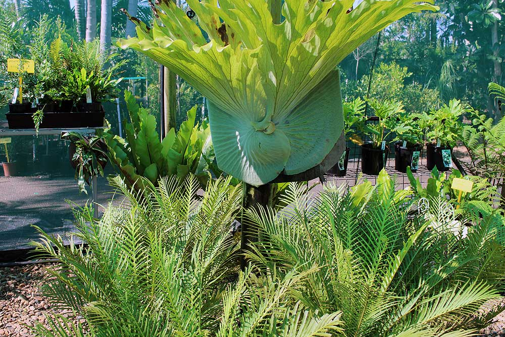tropical-paradise-nursery-bundaberg-10