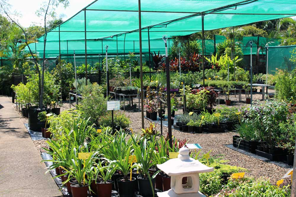 tropical-paradise-nursery-bundaberg-14