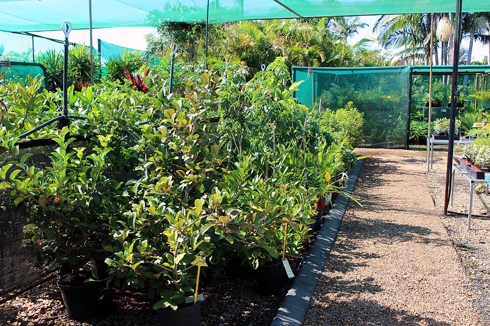 tropical-paradise-nursery-bundaberg-8