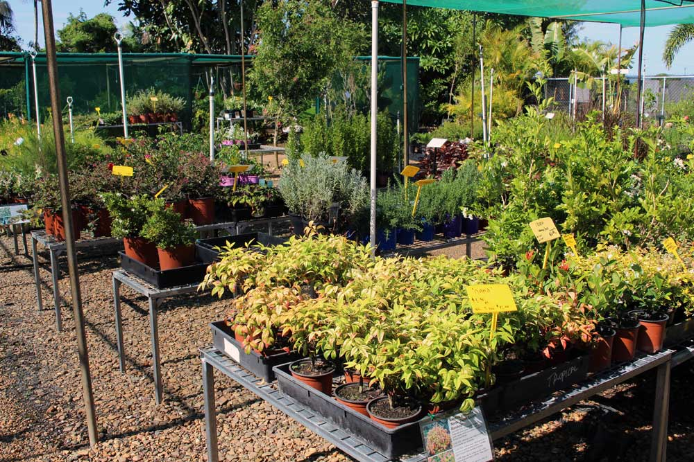 tropical-paradise-nursery-bundaberg-9