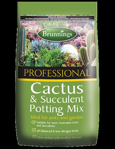 specialty-cactus